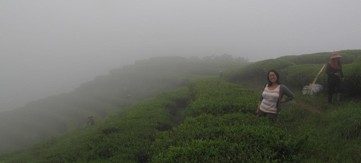 Сбор чая в Фуцзянь
