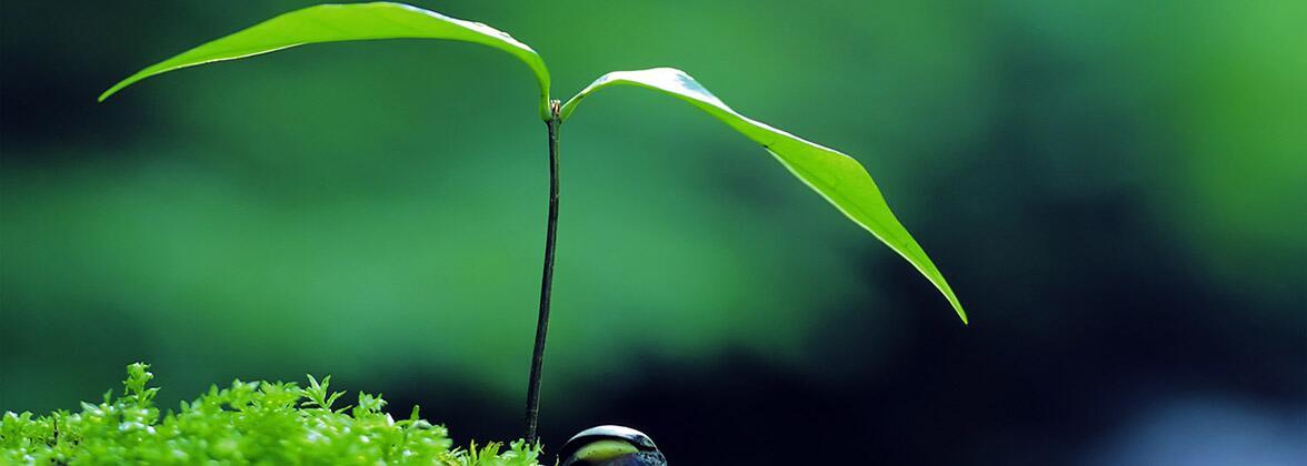 Зеленый чай: правила заваривания