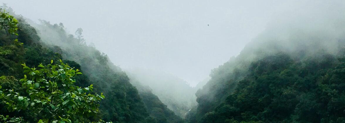 Чайные горы