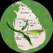 чай зі Шрі-Ланки