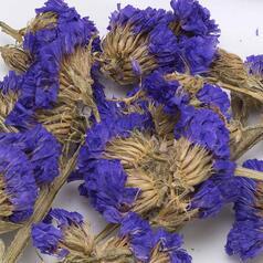 Квіти незабудки - фото 2